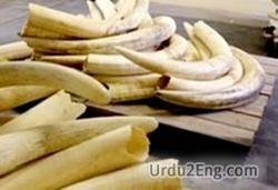 ivory Urdu Meaning