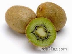 kiwi Urdu Meaning