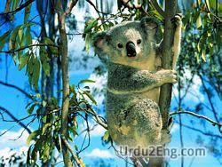 koala Urdu Meaning
