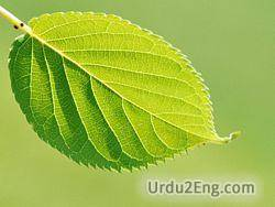 leaf Urdu Meaning