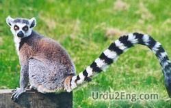 lemur Urdu Meaning