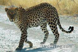 leopard Urdu Meaning