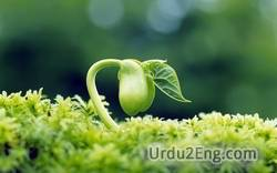 life Urdu Meaning