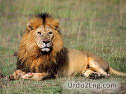 lion Urdu Meaning