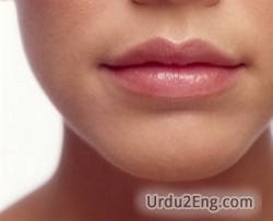 lip Urdu Meaning