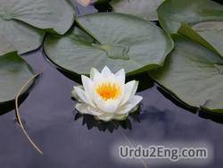 lotus Urdu Meaning