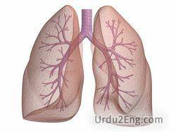 lung Urdu Meaning