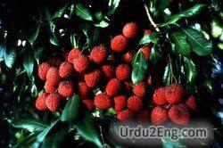 lychee Urdu Meaning
