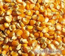 maize Urdu Meaning
