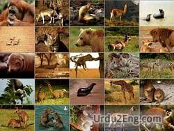 mammal Urdu Meaning