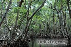 mangrove Urdu Meaning