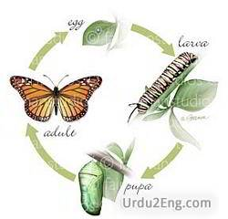 metamorphosis Urdu Meaning