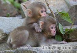monkey Urdu Meaning