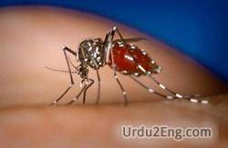 mosquito Urdu Meaning