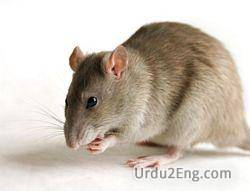 mouse Urdu Meaning