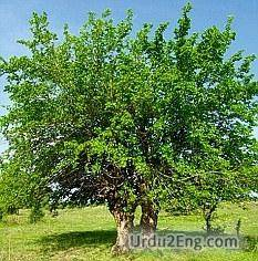 mulberry Urdu Meaning