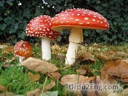 mushroom Urdu Meaning