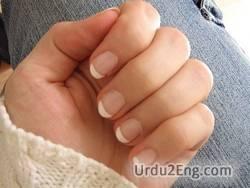 nail Urdu Meaning