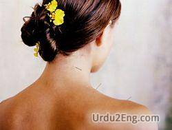 neck Urdu Meaning
