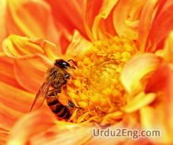 nectar Urdu Meaning