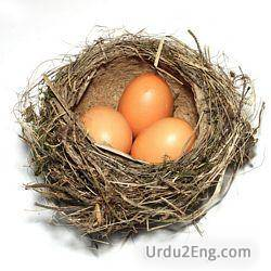 nest Urdu Meaning