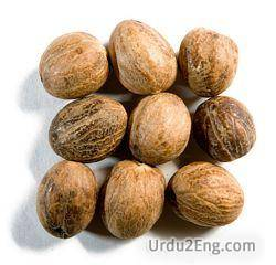 nutmeg Urdu Meaning