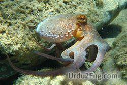 octopus Urdu Meaning