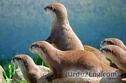 otter Urdu Meaning