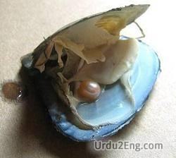 oyster Urdu Meaning