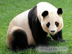panda Urdu Meaning