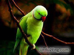 parrot Urdu Meaning