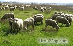 pasture Urdu Meaning