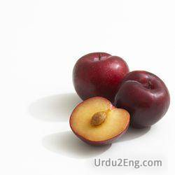 plum Urdu Meaning
