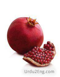 pomegranate Urdu Meaning