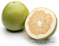 pomelo Urdu Meaning