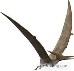 pterosaur Urdu Meaning
