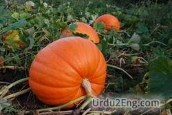 pumpkin Urdu Meaning