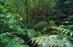 rainforest Urdu Meaning