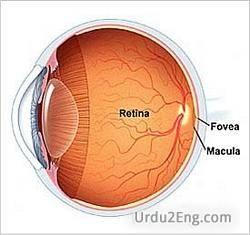 retina Urdu Meaning