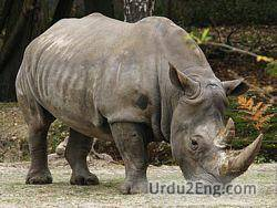 rhinoceros Urdu Meaning