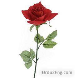 rose Urdu Meaning