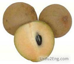 sapodilla Urdu Meaning