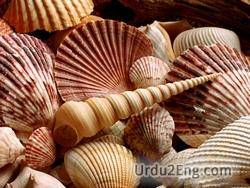 seashell Urdu Meaning