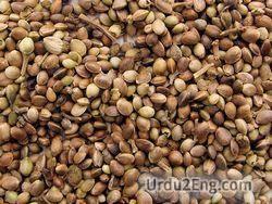 seed Urdu Meaning