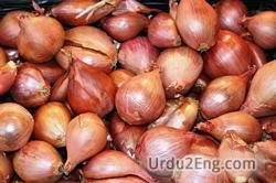 shallot Urdu Meaning