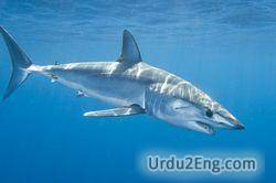 shark Urdu Meaning