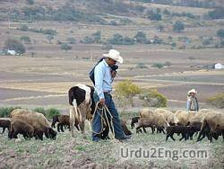 sheepherder Urdu Meaning