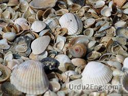 shell Urdu Meaning