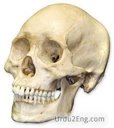 skull Urdu Meaning