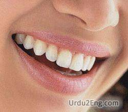 smile Urdu Meaning